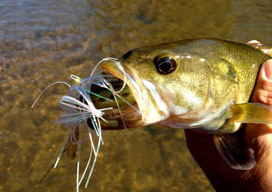 How to Tie a Chatterbait