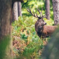 5 Things to Do Before Going on a Deer Hunt